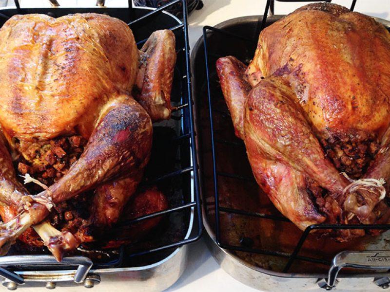 Thanksgiving Turkeys||